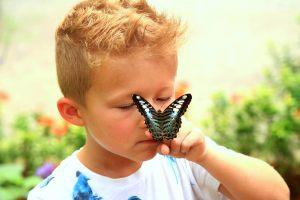 hktmb-butterfly-0130-hor-clsc